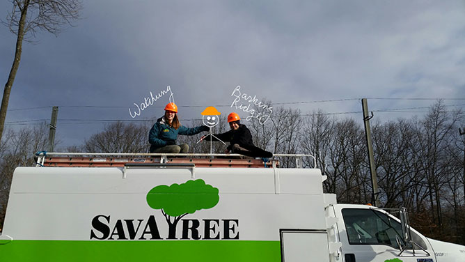 Our licensed tree experts and certified arborists are highly experienced in addressing the conditions specific to Basking Ridge, NJ, and the surrounding areas.