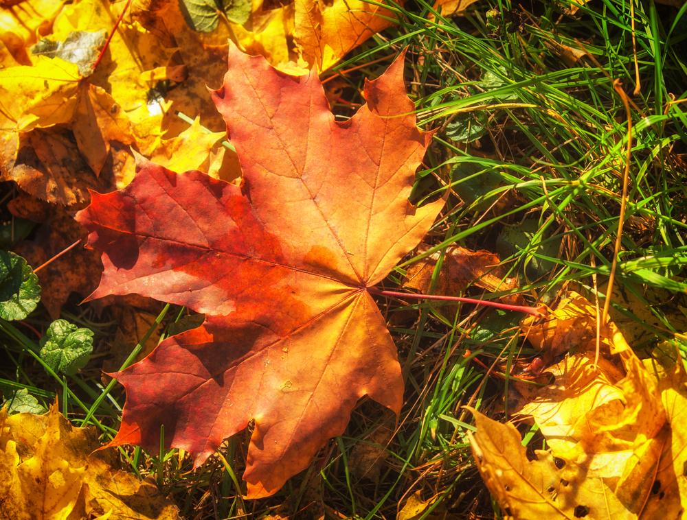 Tree Service - Fall Leaves