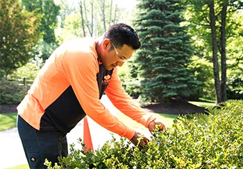 Shrub Maintenance