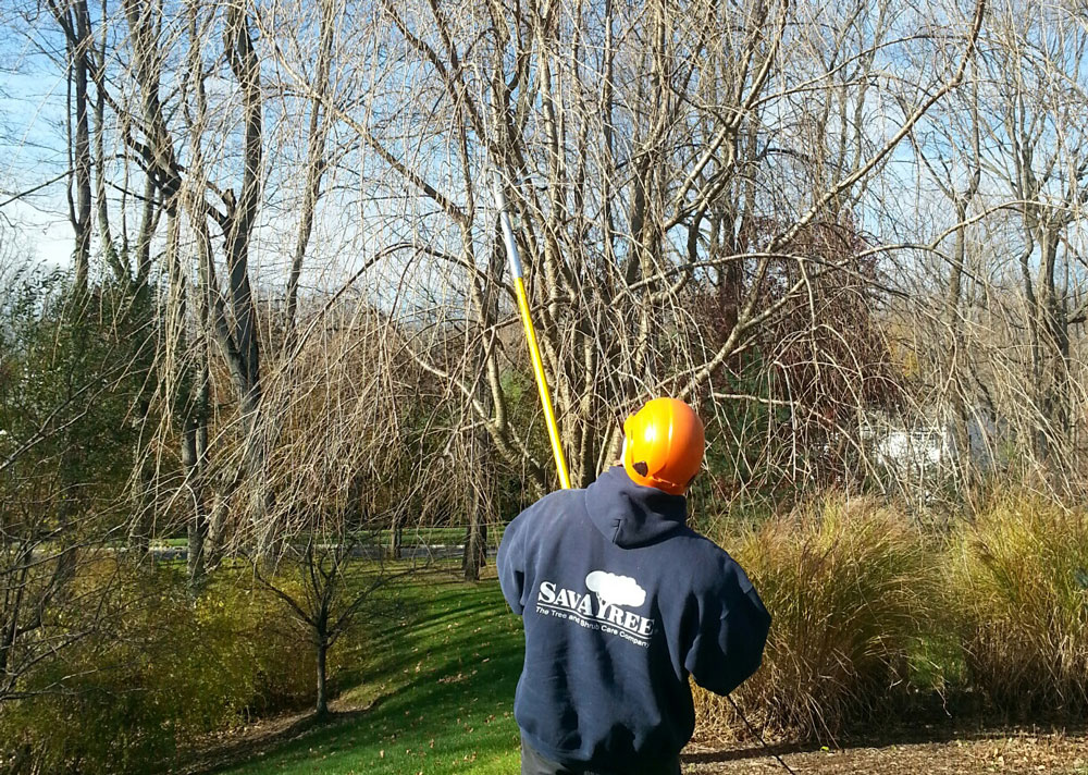Winter pruning done by a certified arborist