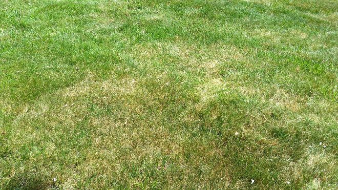 Help Your Lawn Weather the Dry Spell