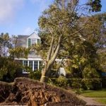 emergency tree removal milton ga