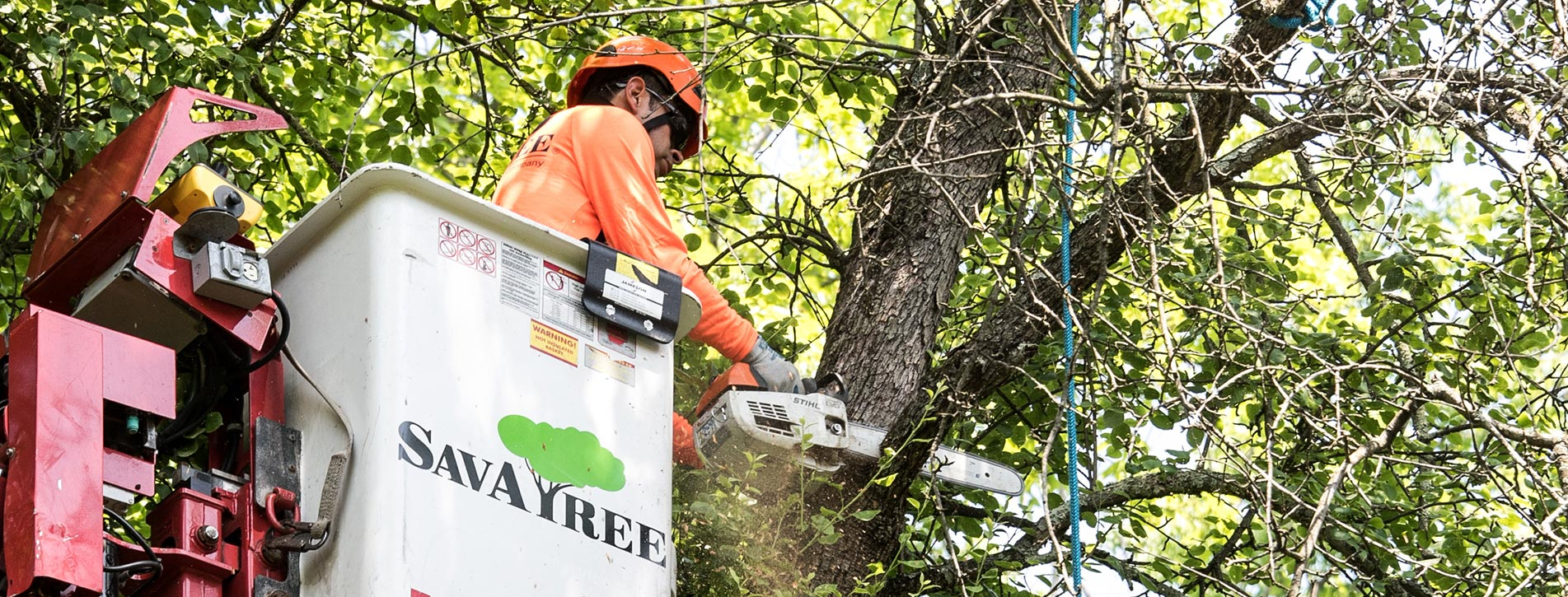Tree Quotes | SavATree Expert Tree Services