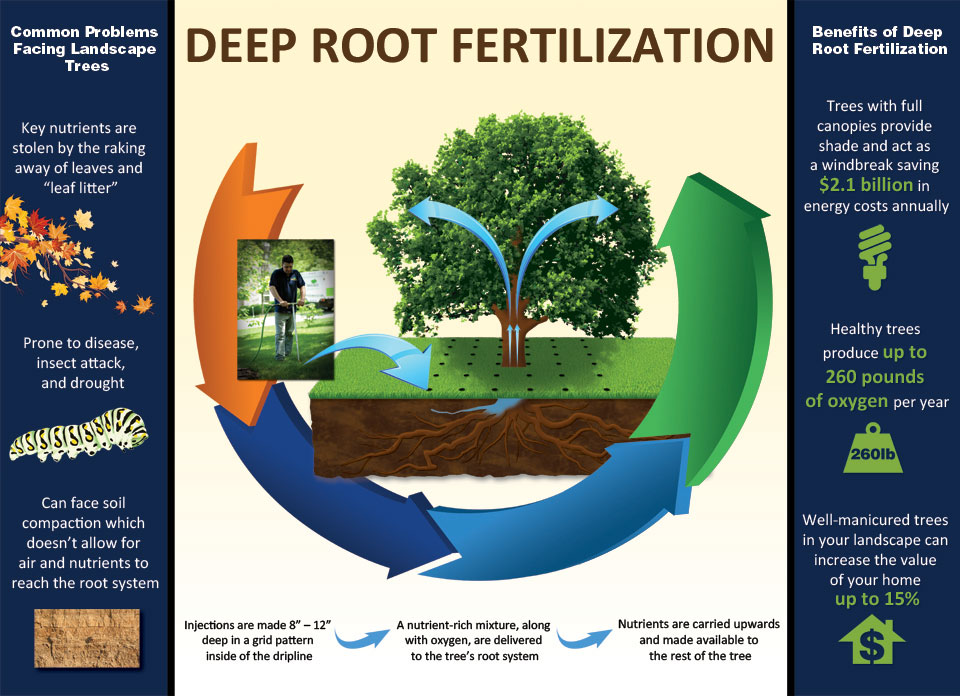 deep root fertilization