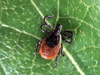 Tick treatments