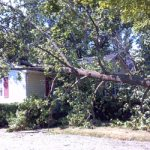 doraville emergency tree removal