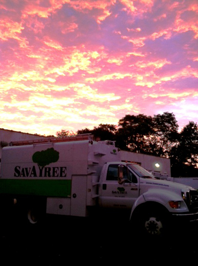 Beautiful Sunset and SavATree Truck