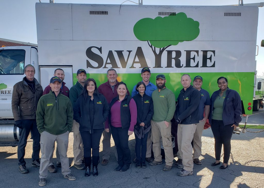 Springfield Virginia Tree Service