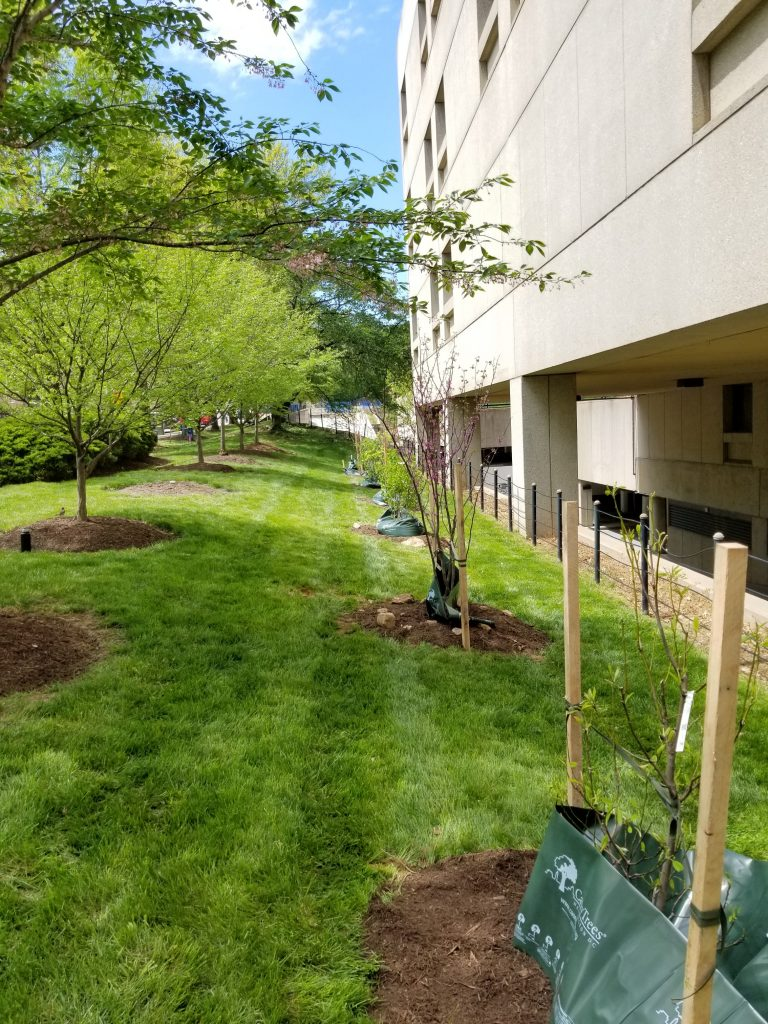 washington dc certified arborist