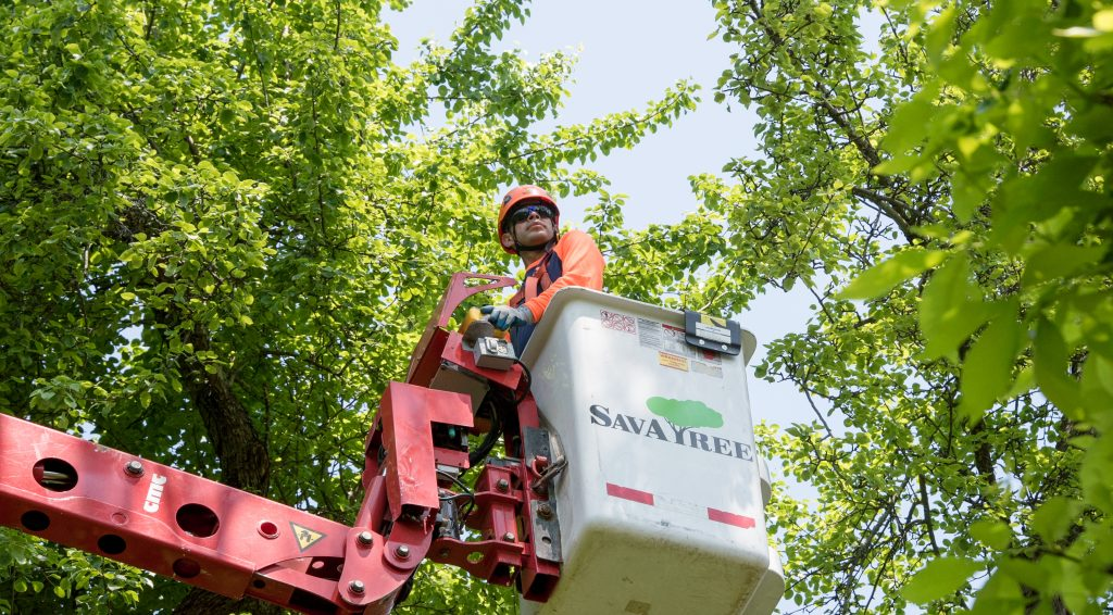 SaATree performing tree trimming service