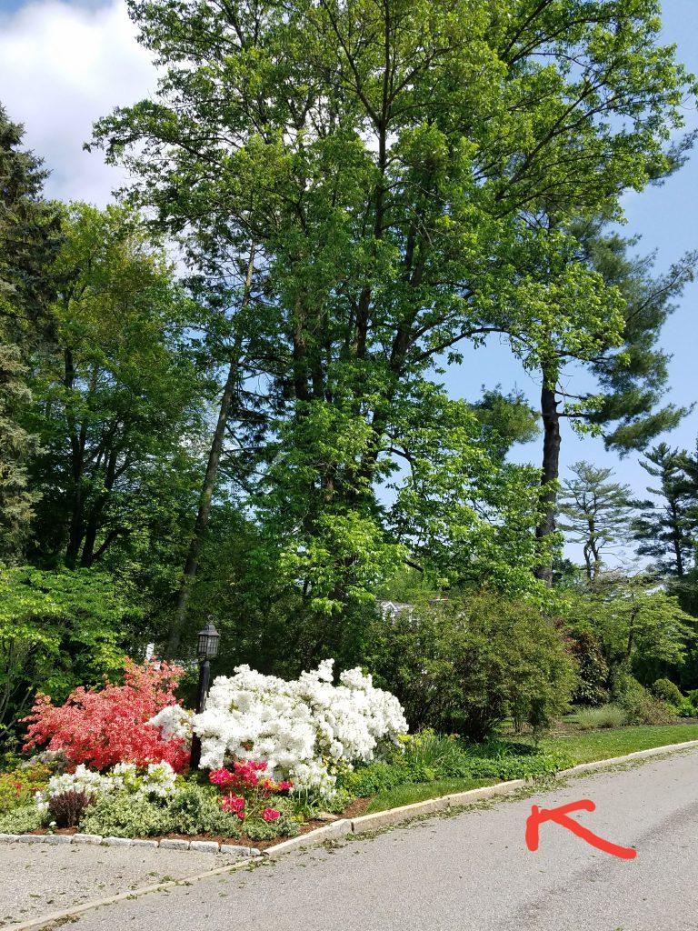 gladwyne pa tree service