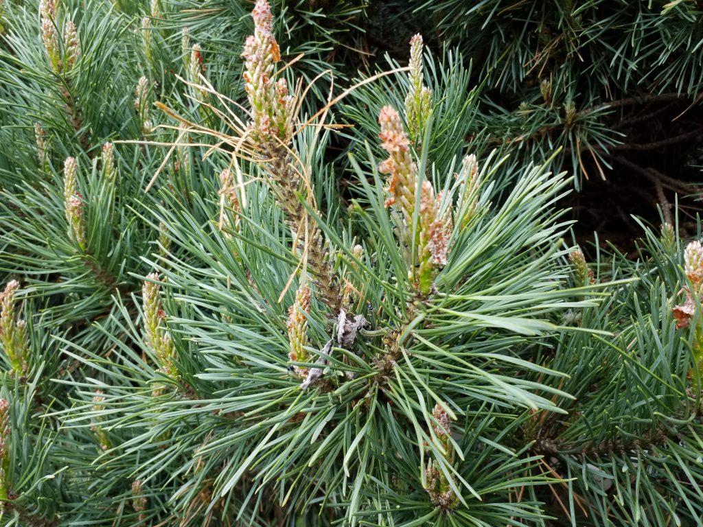 Fort Washington PA Tree Care