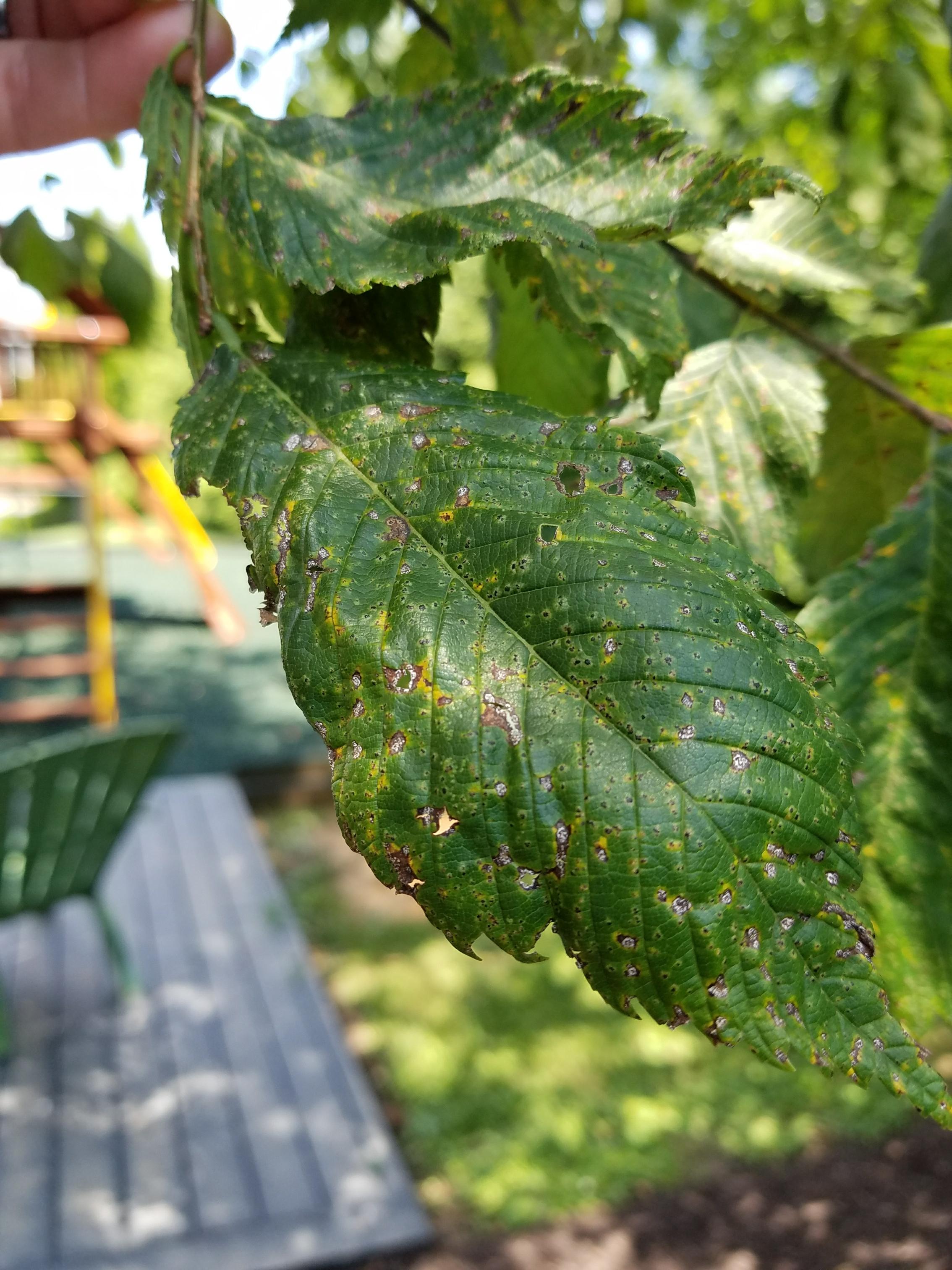 tree disease treatments alexandria va