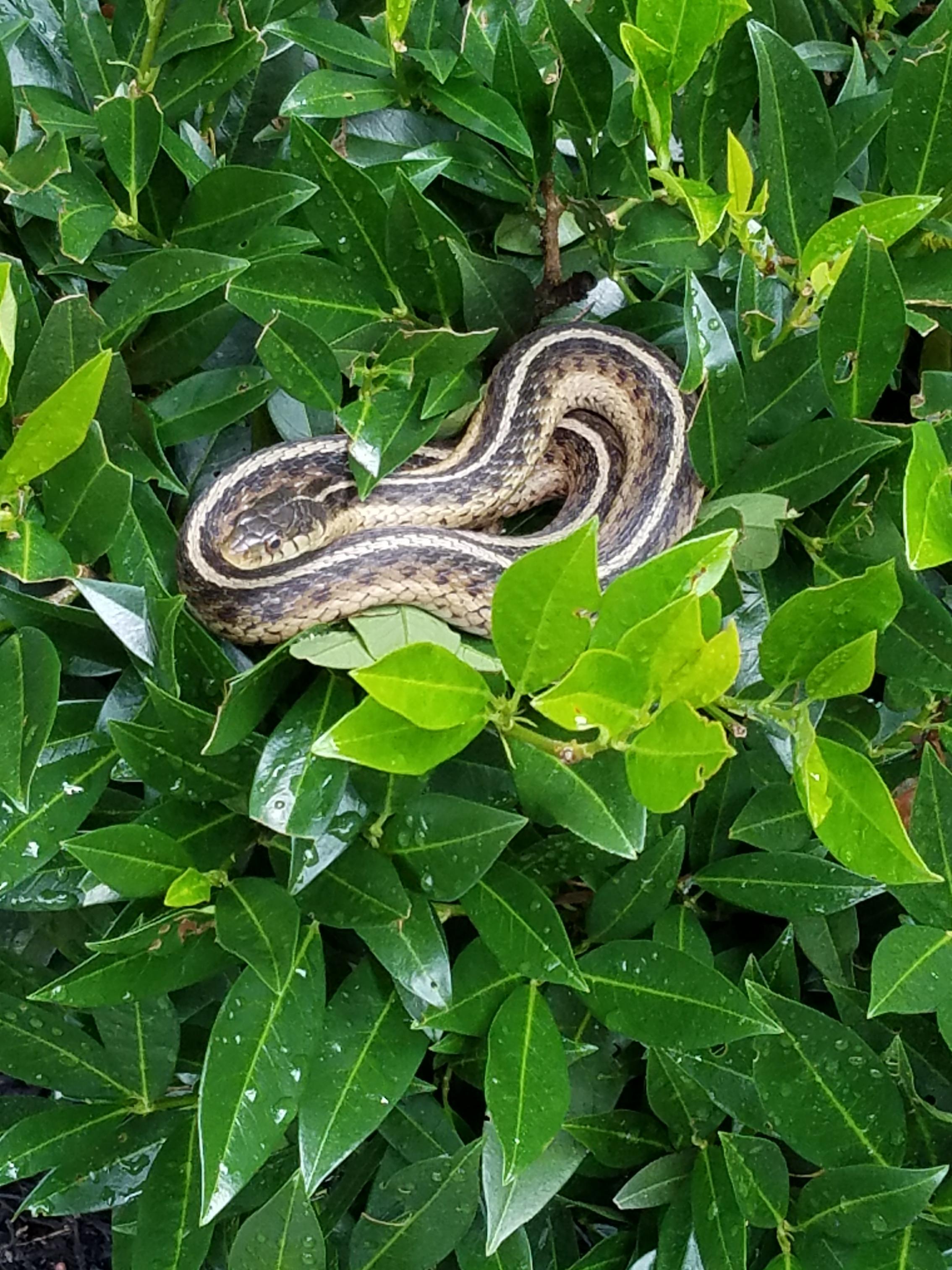 alexandria va snake