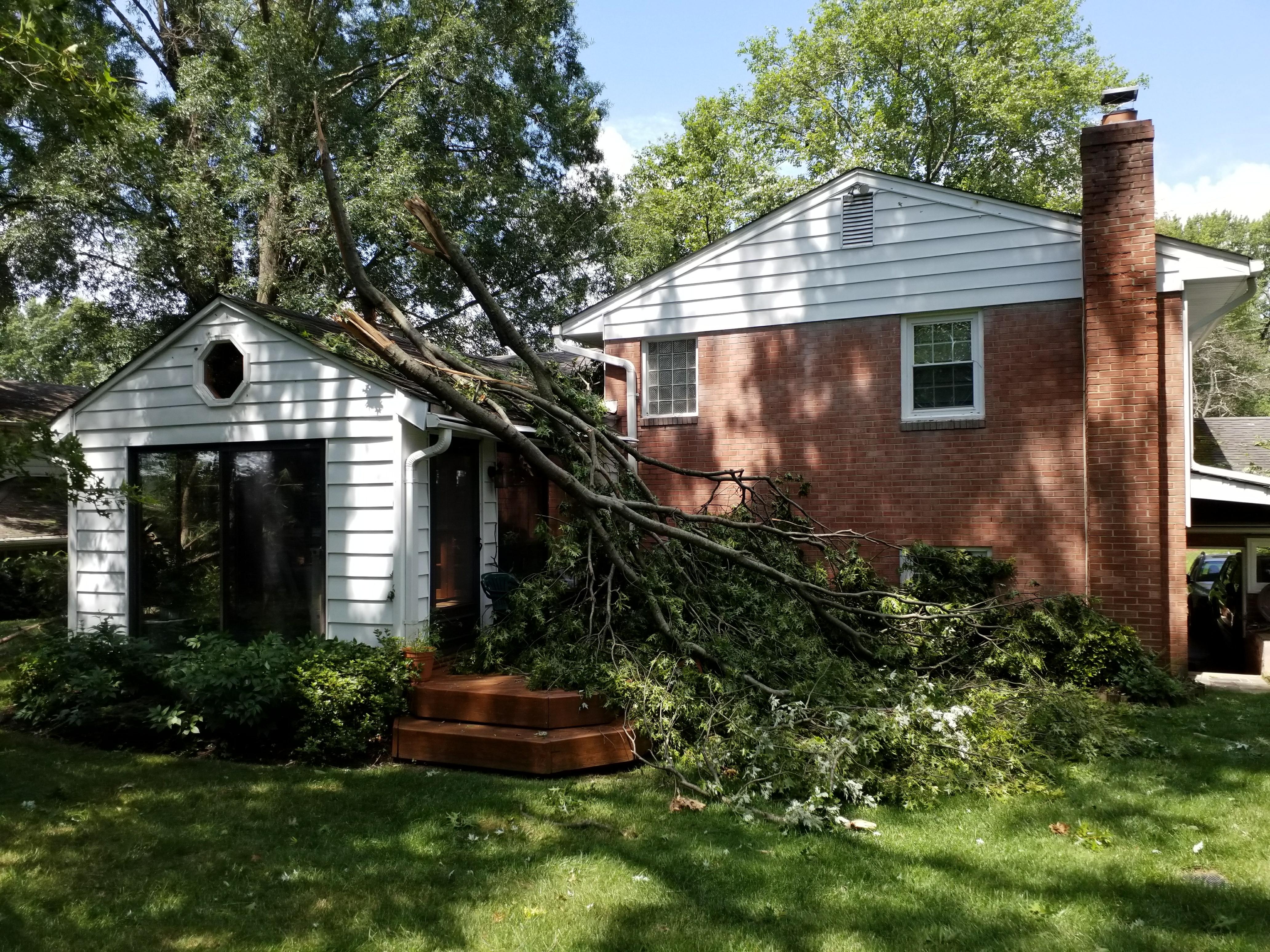 tree removal alexandria va
