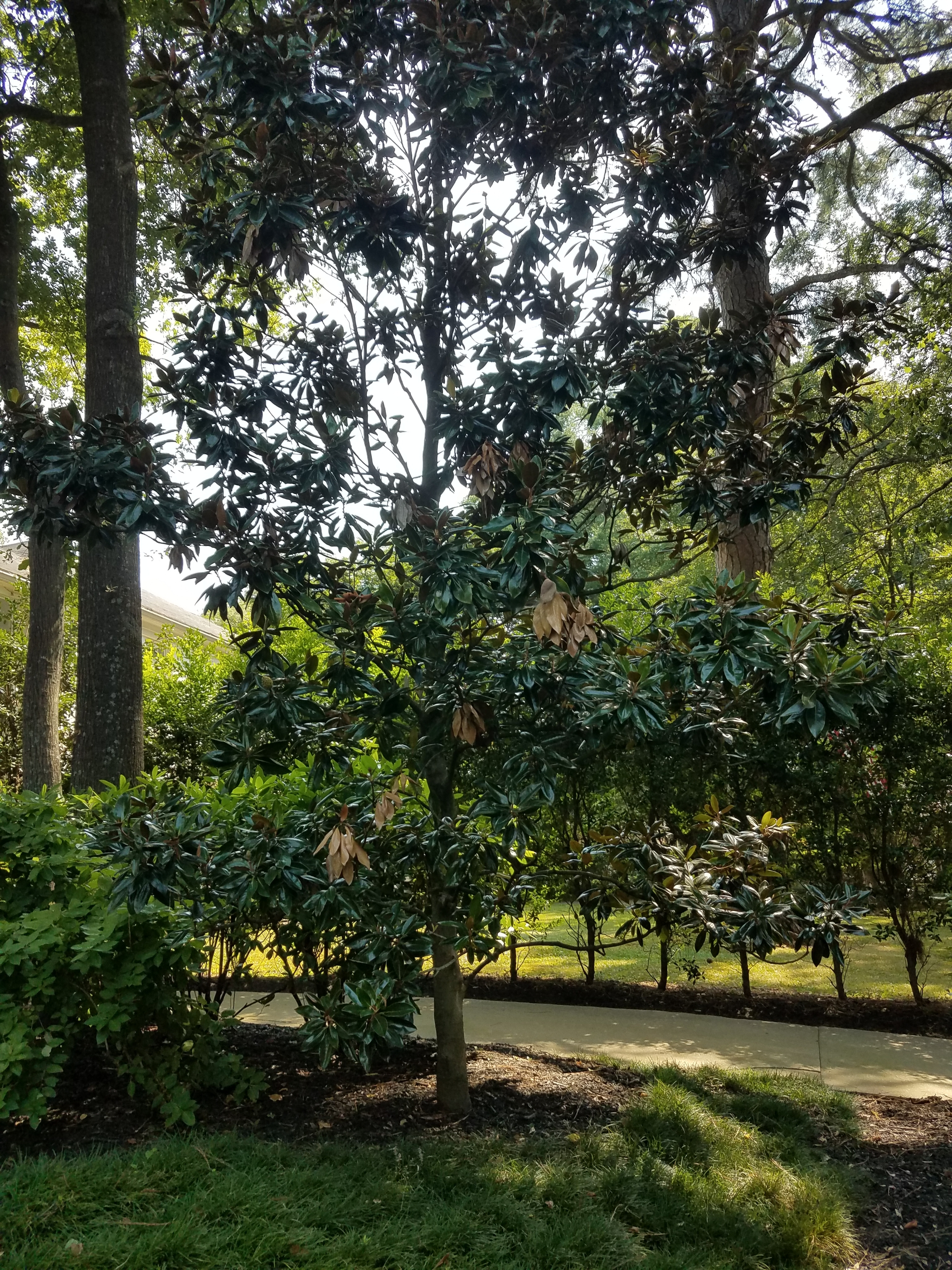 atlanta ga tree care