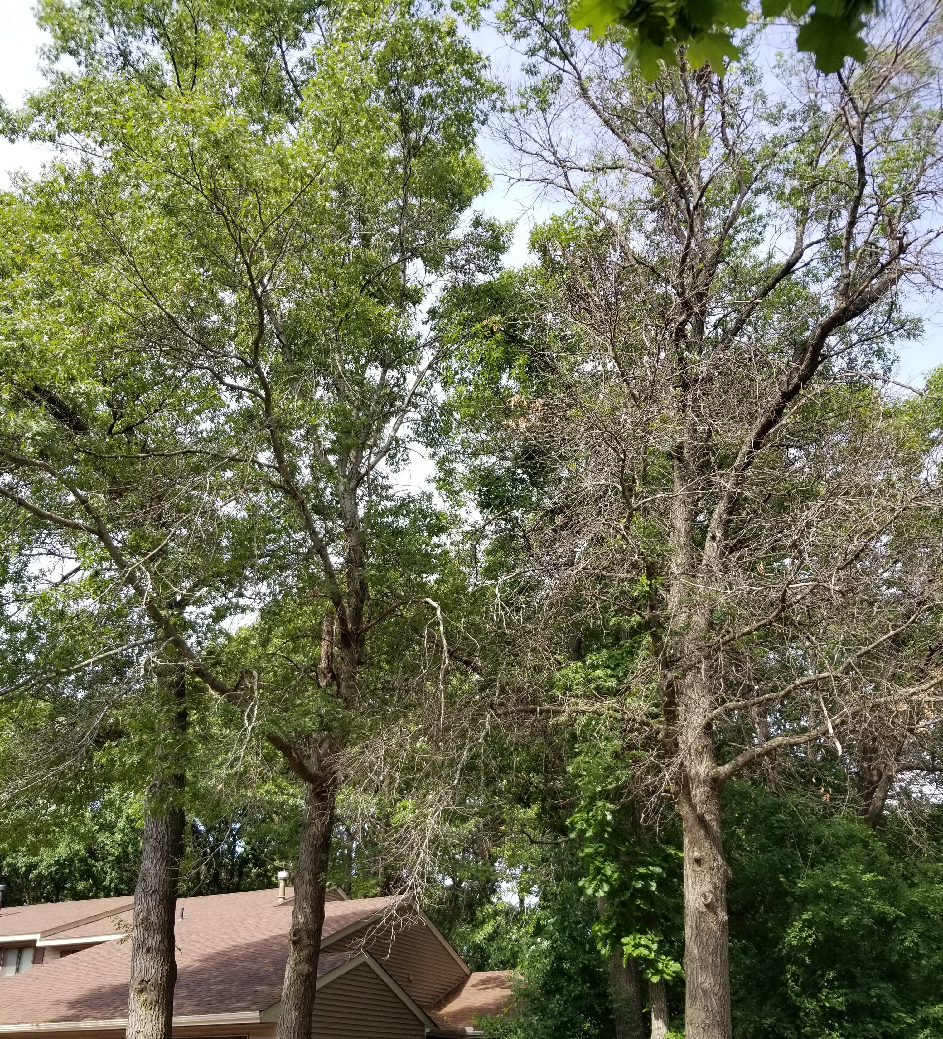 Maplewood MN Tree Service