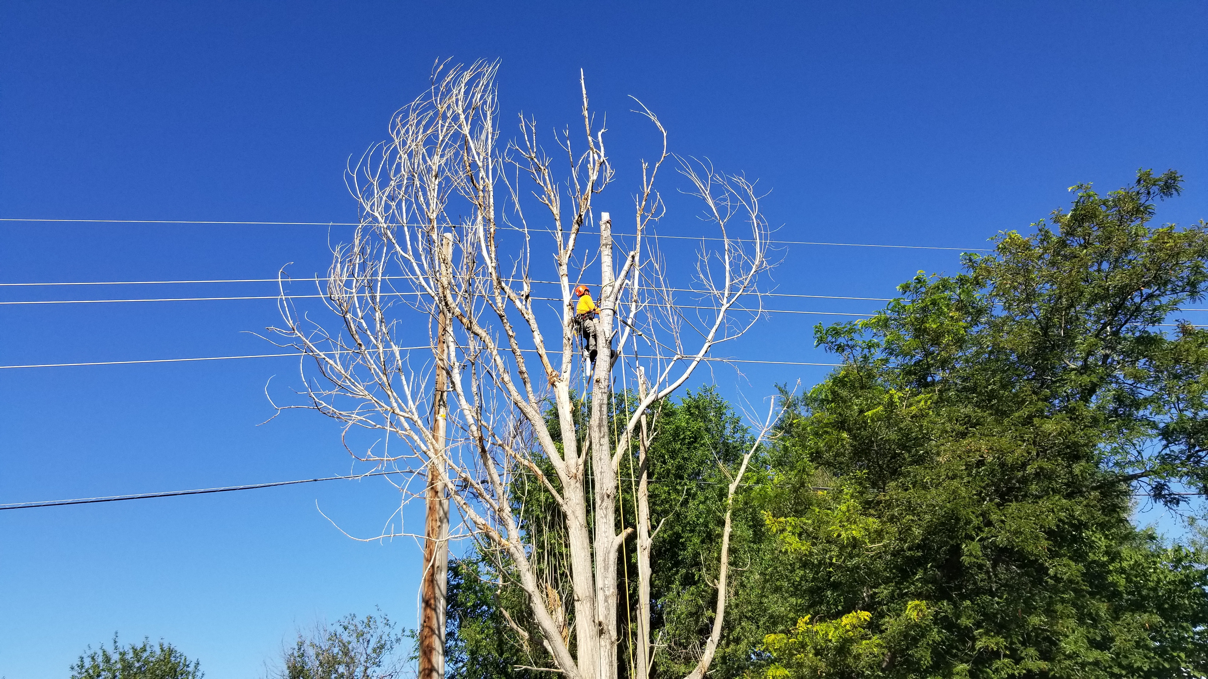 Tree Removal in Thornton, CO