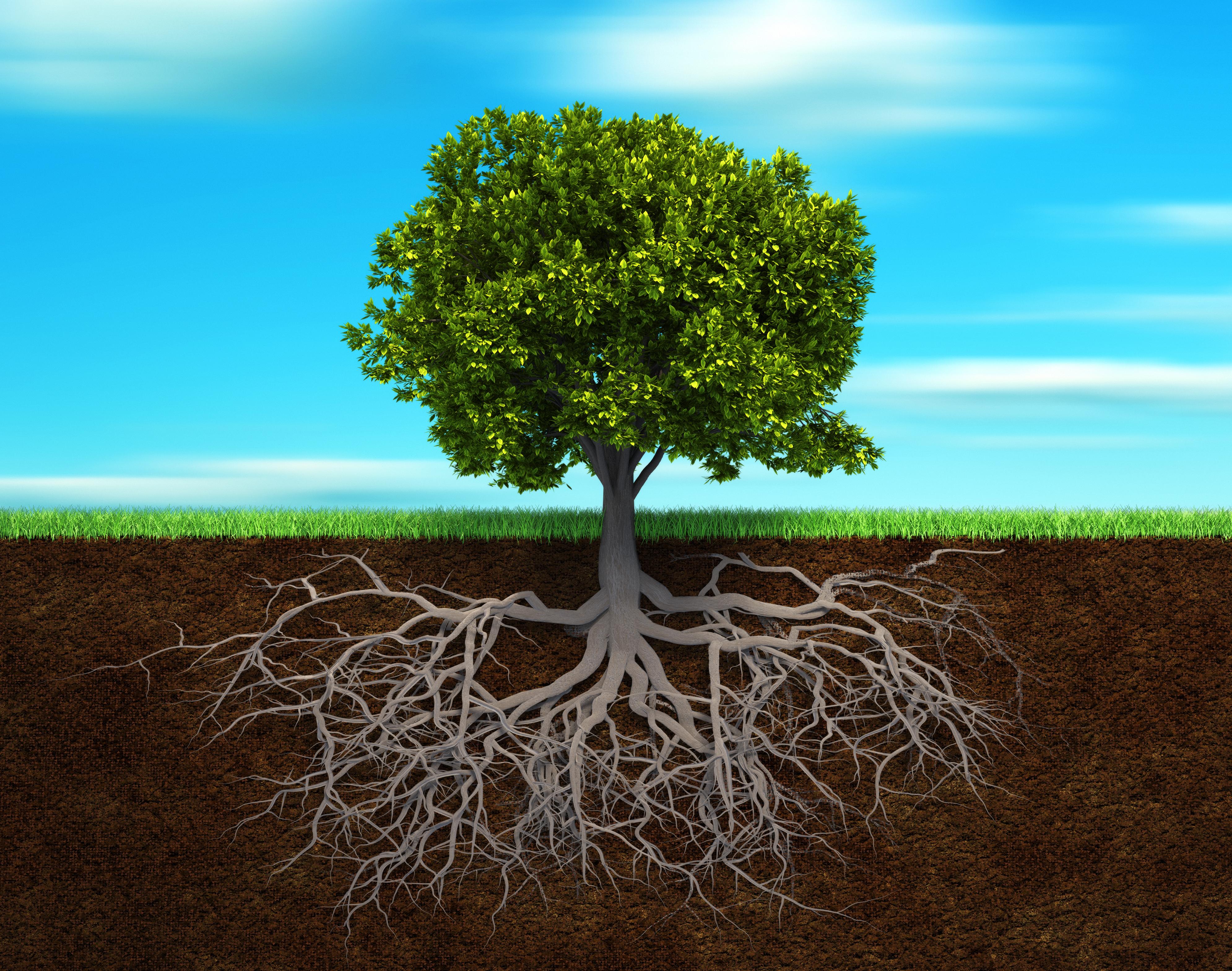 underground tree roots