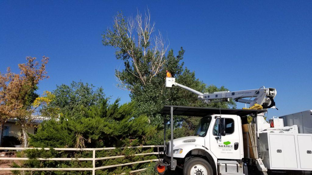 SavATree - Tree Service & Lawn Care