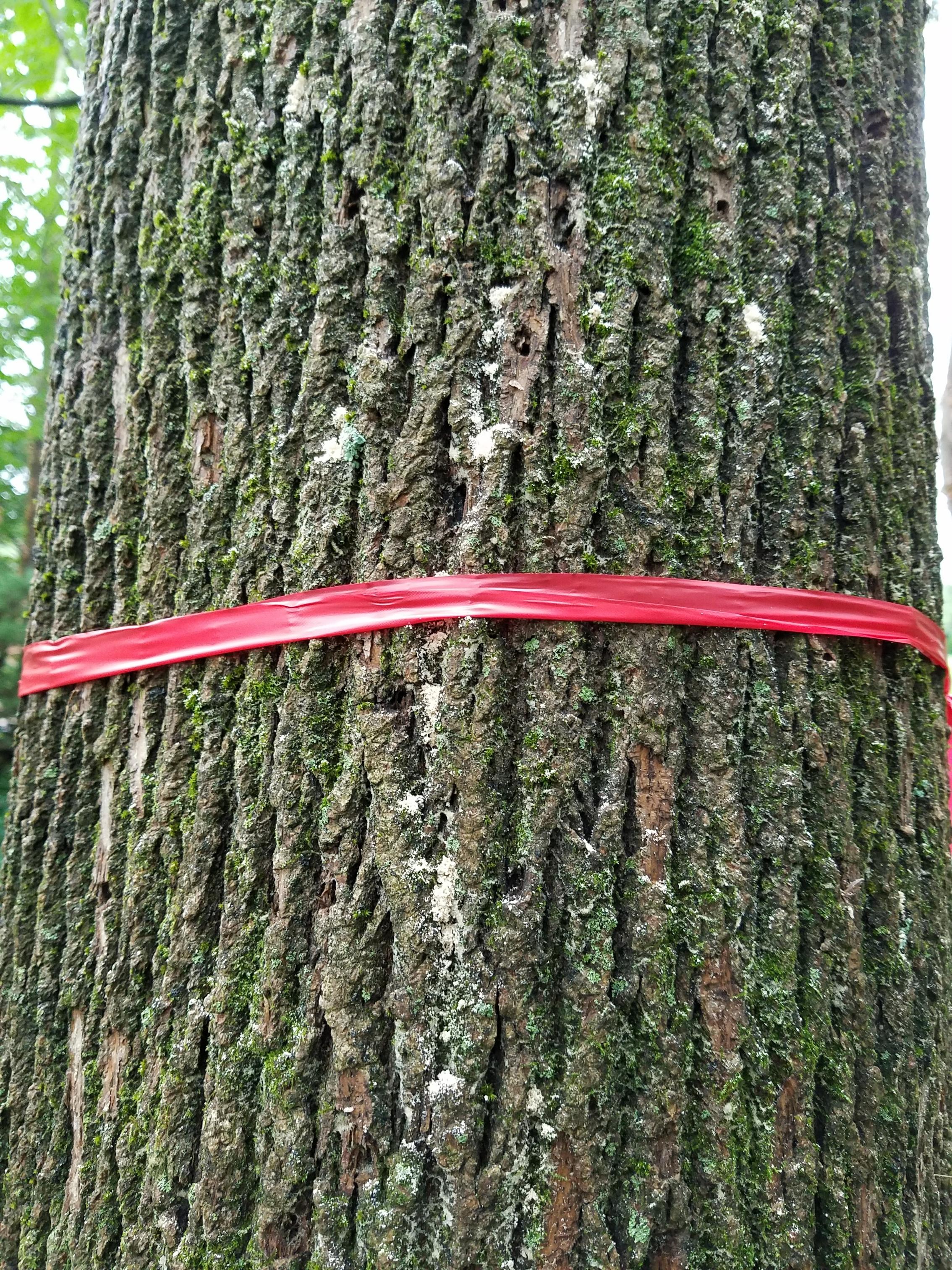 tree service alexandria VA