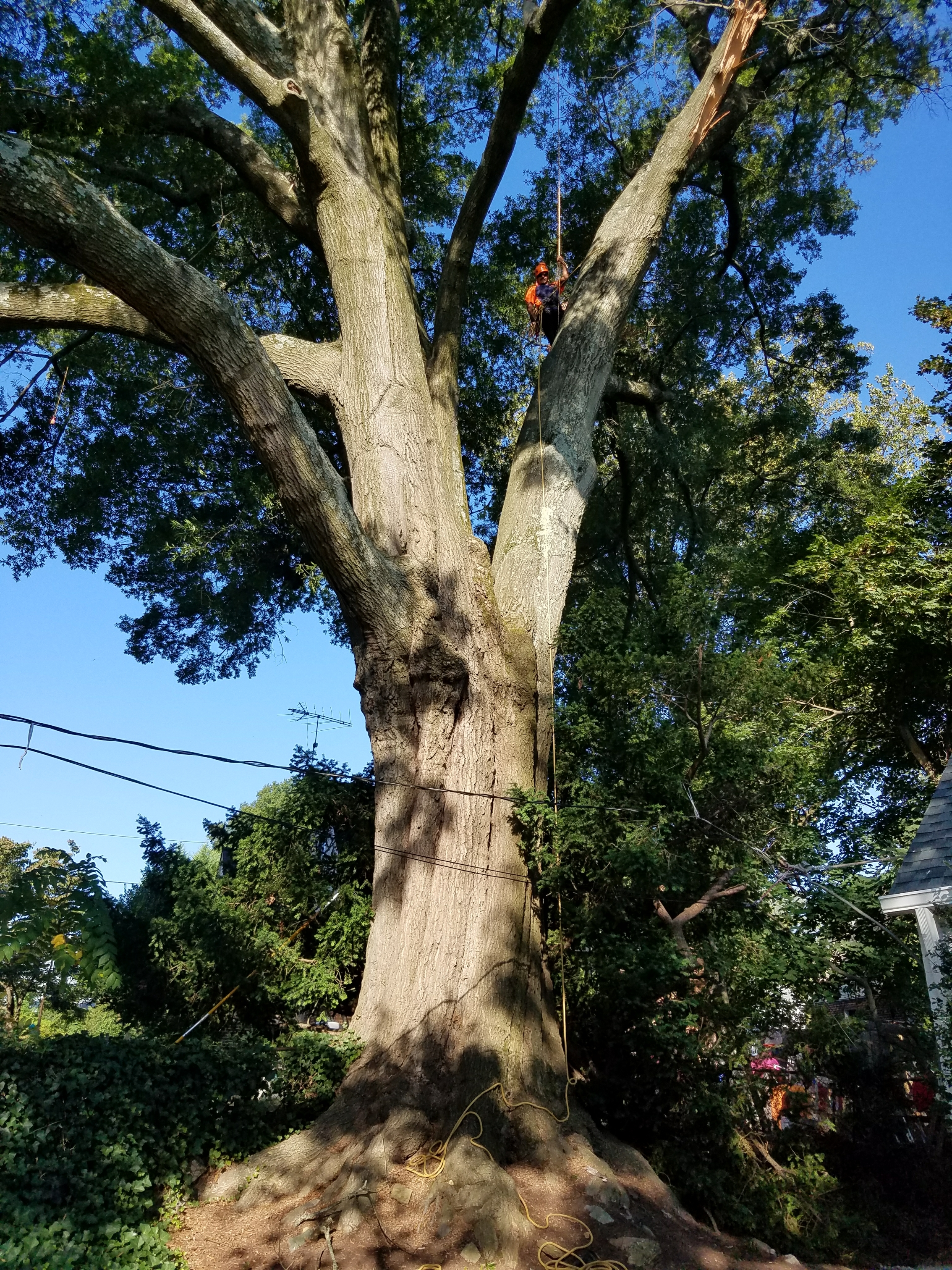 Tree Pruning Silver Spring MD