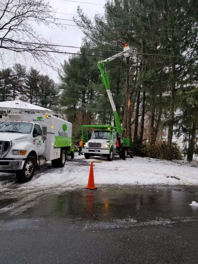South Windsor CT Tree Care